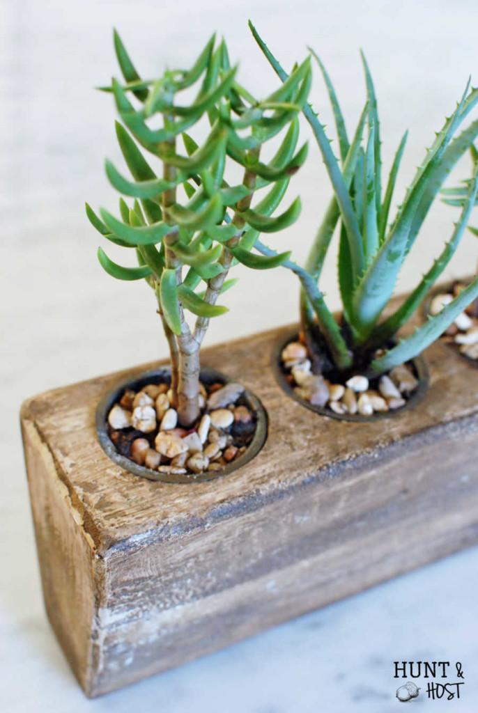 Succulent sugar mold arrangement plus a money saving tip